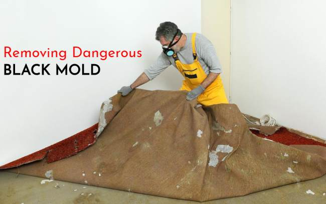 How to Remove Mold from Carpet Vinegar